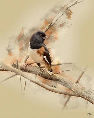 Bird Art - Eastern Towhee - Male Poster