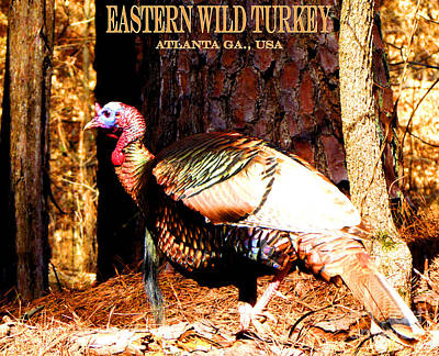 Eastern Wild Turkey Poster by Gardening Perfection