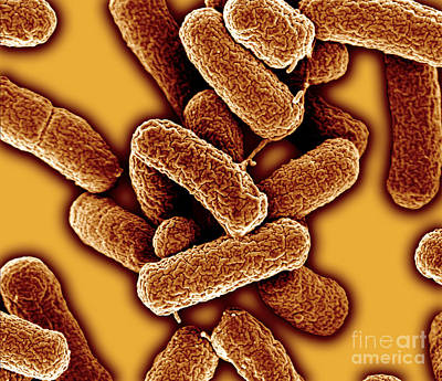 E.coli 1d Poster by Natures geometry