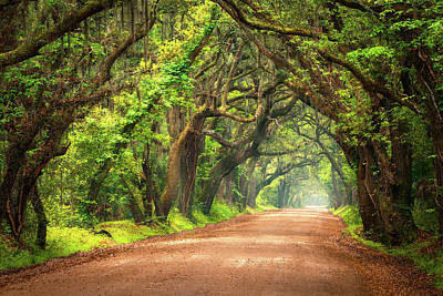 Edisto Island South Carolina Dirt Road Landscape Charleston Sc Poster