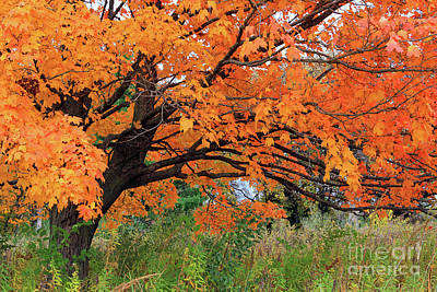 Edna's Tree Poster