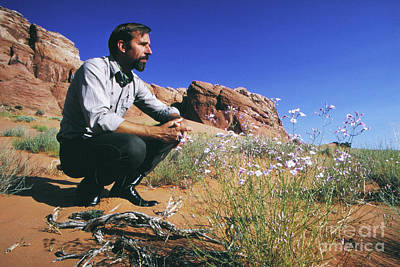 Edward Abbey, Author Of Desert Solitaire, Shown Here In The Dese Poster