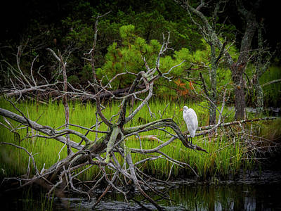 Egret At Pine Knoll 2 Poster