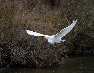 Poster featuring the photograph Egret In Flight by George Randy Bass