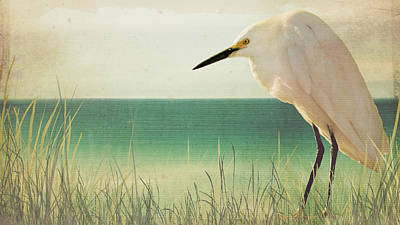 Egret In Morning Light Poster