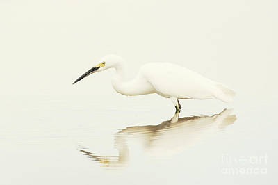 Egret In Vanilla Tones Poster by Ruth Jolly