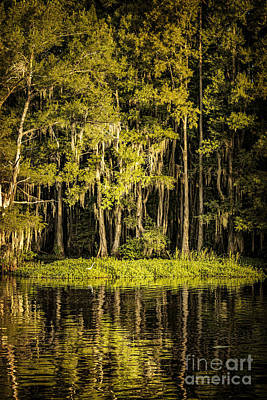 Egret On Caddo Lake II Poster