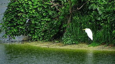 Egret Wakodahatchee Florida Wetlands Poster