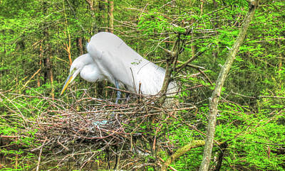 Egrets And Eggs Poster