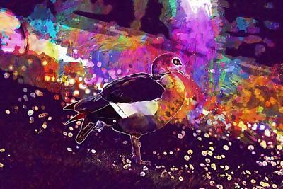 Egyptian Goose Goose Geese Bird  Poster