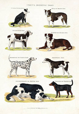 Eight Different Useful Domestic Dogs Poster
