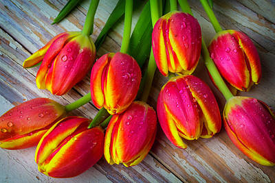 Eight Tulips Poster by Garry Gay