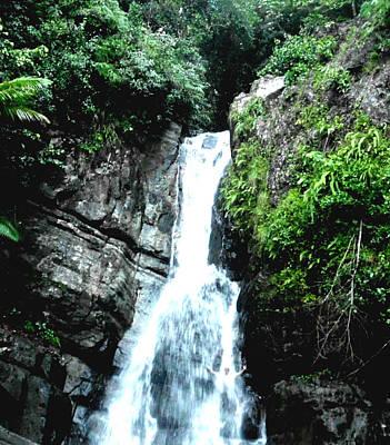 El Yunqe Rainforest Puerto Rico Poster by Sheryl Chapman Photography