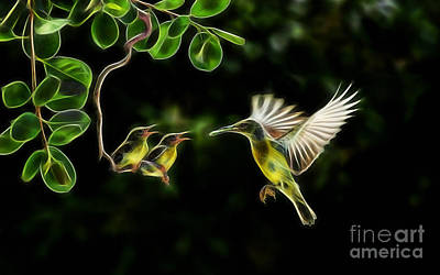 Electric Hummingbird Wall Art Collection Poster
