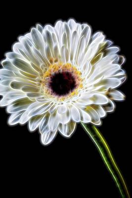 Electric White Daisy Poster