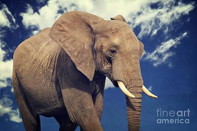 Elefanten Portrait Poster by Angela Doelling AD DESIGN Photo and PhotoArt