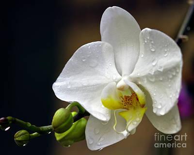 Elegance In White Poster