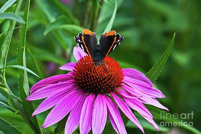 Elegant Butterfly Poster