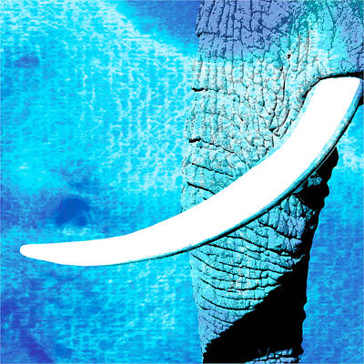 Elephant Animal Decorative Wall Poster  6 Poster