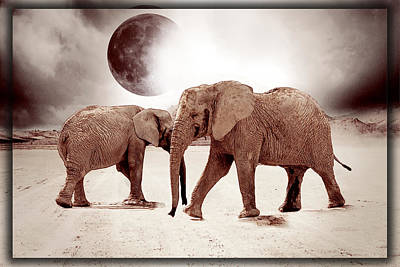 Elephant Drawing Poster