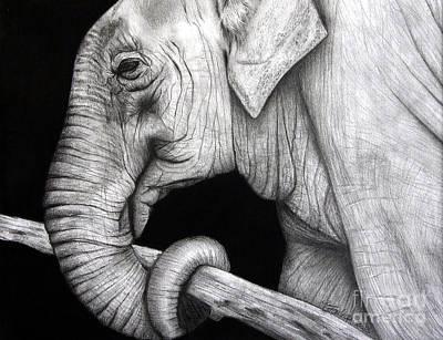 Elephant Poster by Erika Farkas