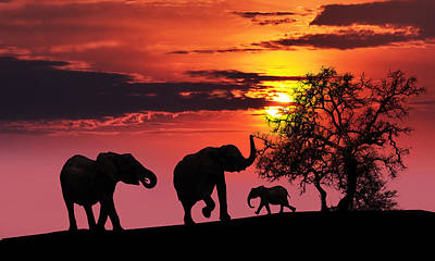 Elephant Family At Sunset Poster