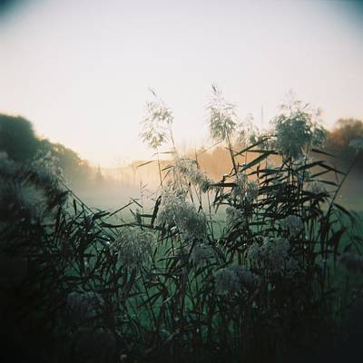 Elephant Grass At Dawn Poster