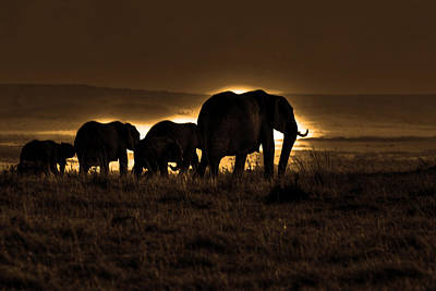 Elephant Herd On The Masai Mara Poster