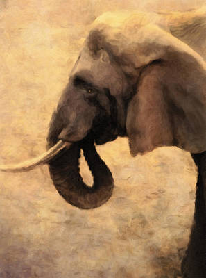 Elephant In The Sunlight Poster by Georgiana Romanovna