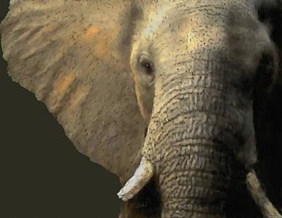 Elephant Portrait Poster by Kathie Miller