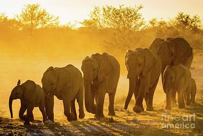 Elephant Sunset Poster by Inge Johnsson