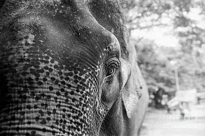 Poster featuring the photograph Elephant's Eye by Dean Harte