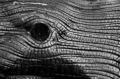 Elephant's Eye Poster