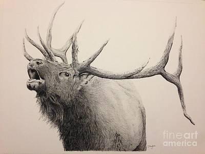 Elk Bugling  Poster