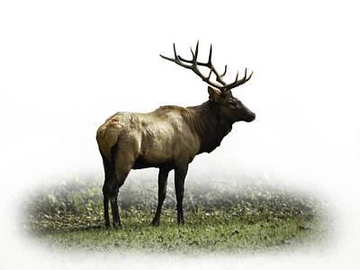 Elk IIi Poster by Debra and Dave Vanderlaan