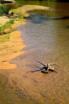 Elk River Driftwood Poster