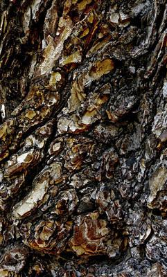 Elm Tree Bark Pattern Poster
