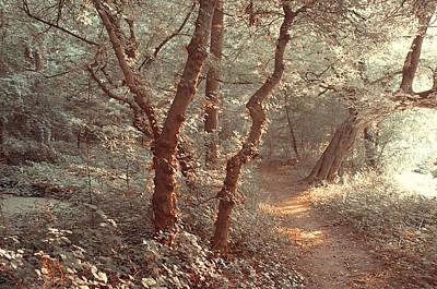 Elvish Forest. Nature In Alien Skin Poster