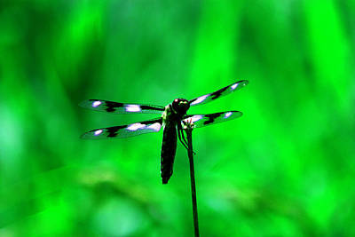 Emerald Dragon Fly Poster by Nick Gustafson