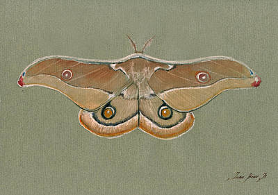 Emperor Gum Moth Poster by Juan Bosco