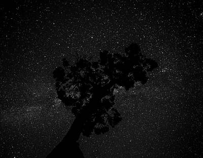 Poster featuring the photograph Empty Night Tree by T Brian Jones