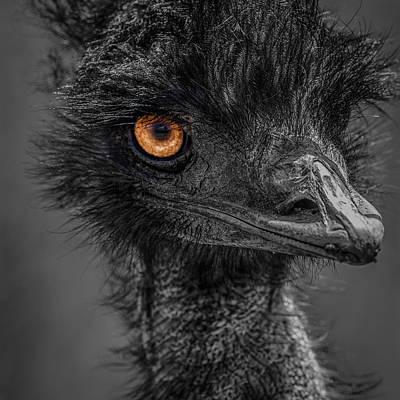 Emu Poster by Paul Freidlund