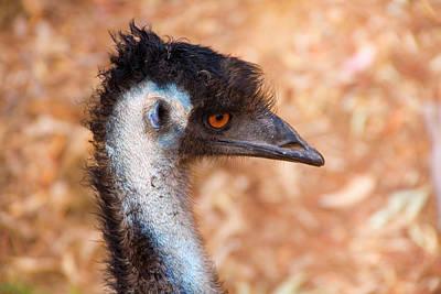 Emu Profile Poster by Mike  Dawson