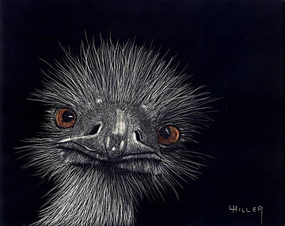 Emus In The Morning Poster by Linda Hiller