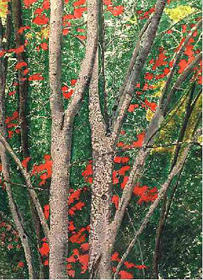 Enchanted Birches Poster