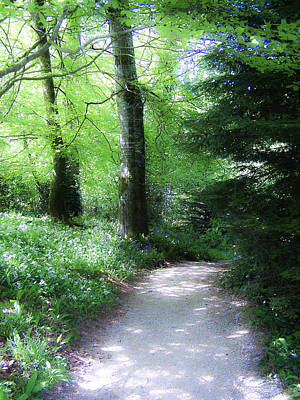 Enchanted Forest At Blarney Castle Ireland Poster