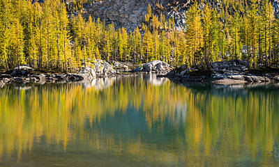 Enchanted Larches Poster by Brian Bonham