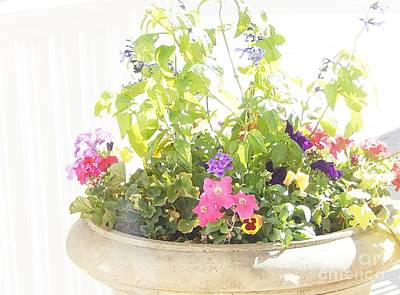 Enchanting Summertime Blossoms Poster