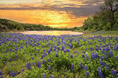 End Of A Bluebonnet Day Poster