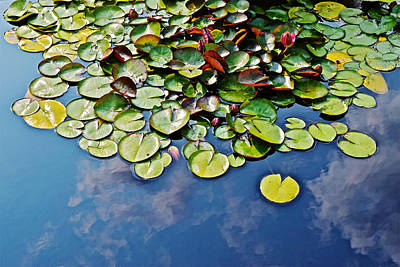 End Of July Water Lilies In The Clouds Poster